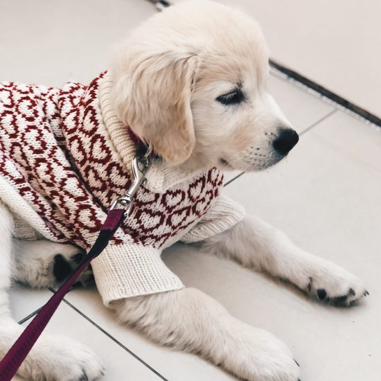 Van Beren dog sweater MONDAY, handmade in Austria, merino wool, eco consciouis clothes, dog present, hand knitted, fairfashion, heirloom, VAN BEREN