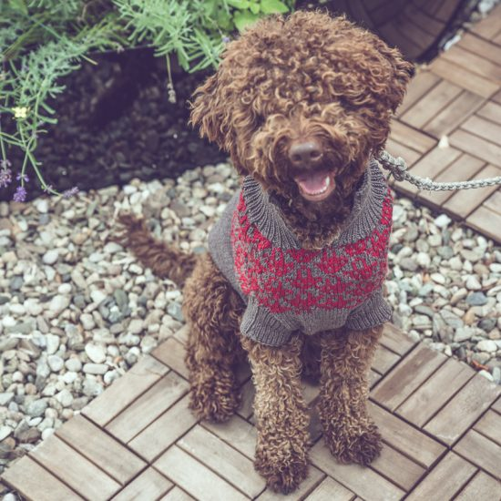 Van Beren dog sweater JAZZMAN, handmade in Austria, merino wool, eco consciouis clothes, dog present, hand knitted, fairfashion, heirloom, VAN BEREN